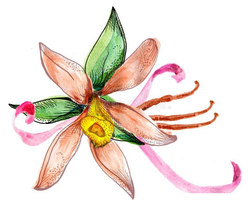 Ramo del bosquejo de la acuarela de la flor stock de ilustración