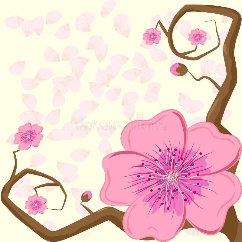 Ramo del fiore di ciliegia con una grande inflorescenza sui precedenti dei petali illustrazione vettoriale