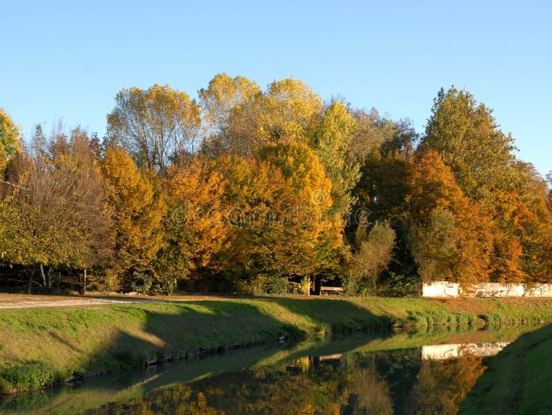 Ramo del fiume di Brenta con le catapulte ed il salice piangente dorato a Mira nella provincia di Venezia nel Veneto (Italia) fotografia stock
