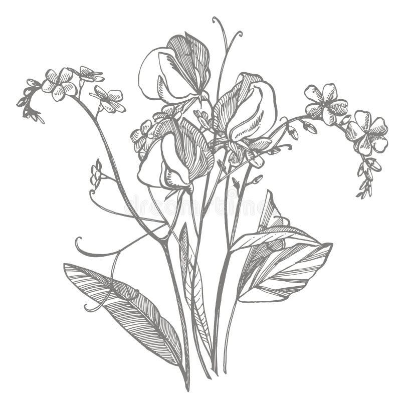 Ramo del nontiscordardime della pianta selvatica e dei piselli dolci Illustrazione incisa annata Mazzo dei fiori disegnati a mano illustrazione di stock