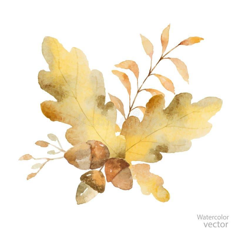 Ramo del otoño del vector de la acuarela de ramas y de hojas del roble aisladas en el fondo blanco libre illustration