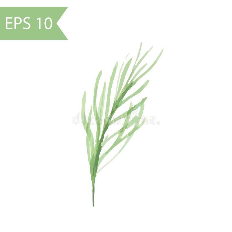 Ramo del pino dell'acquerello di vettore Illustrazione semplice del ramo verde con gli aghi isolati su fondo bianco illustrazione vettoriale
