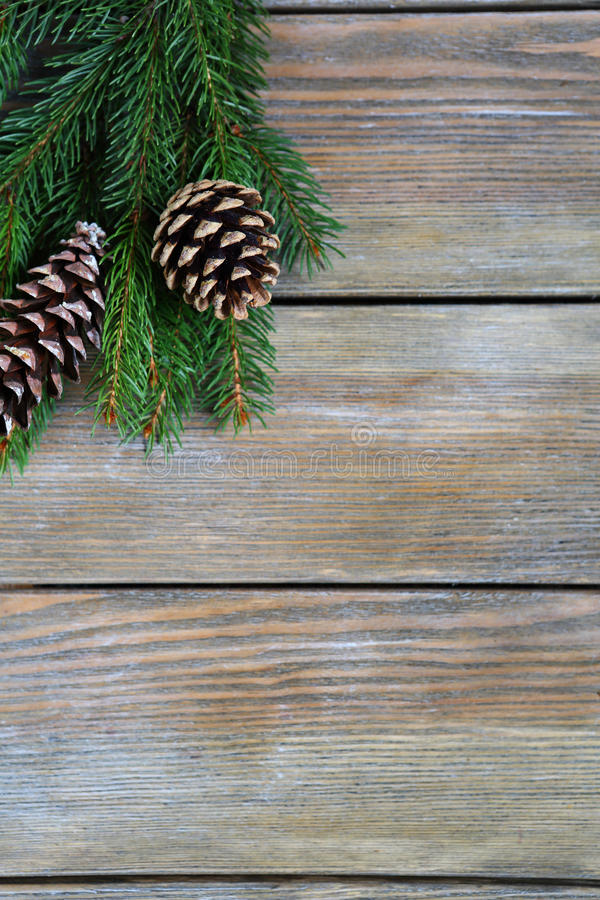 Ramo del pino di Natale con i coni immagini stock libere da diritti