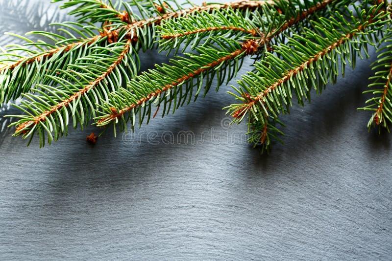 Ramo del pino di Natale sul fondo dell'ardesia fotografie stock libere da diritti
