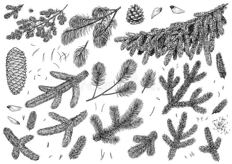 Ramo del pino, illustrazione del cono, disegno, incisione, inchiostro, linea arte, vettore royalty illustrazione gratis