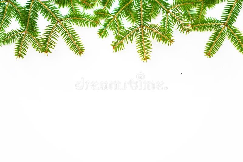Ramo del pino sui precedenti bianchi fotografia stock