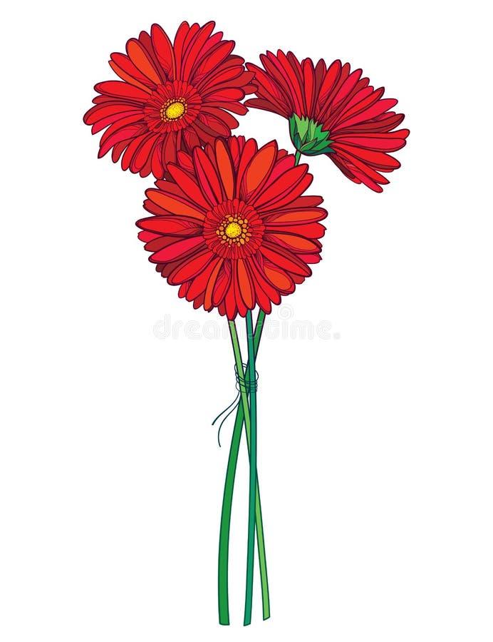 Ramo del vector de flor del Gerbera o de Gerber del esquema tres en rojo aislada en el fondo blanco Manojo de Gerbera de la plant ilustración del vector
