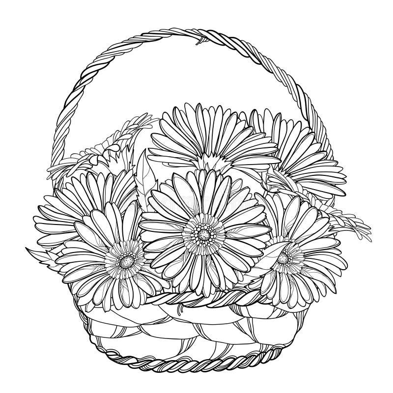 Ramo del vector de Gerbera del esquema o flor y hoja de Gerber en la cesta de mimbre en negro aislada en el fondo blanco ilustración del vector