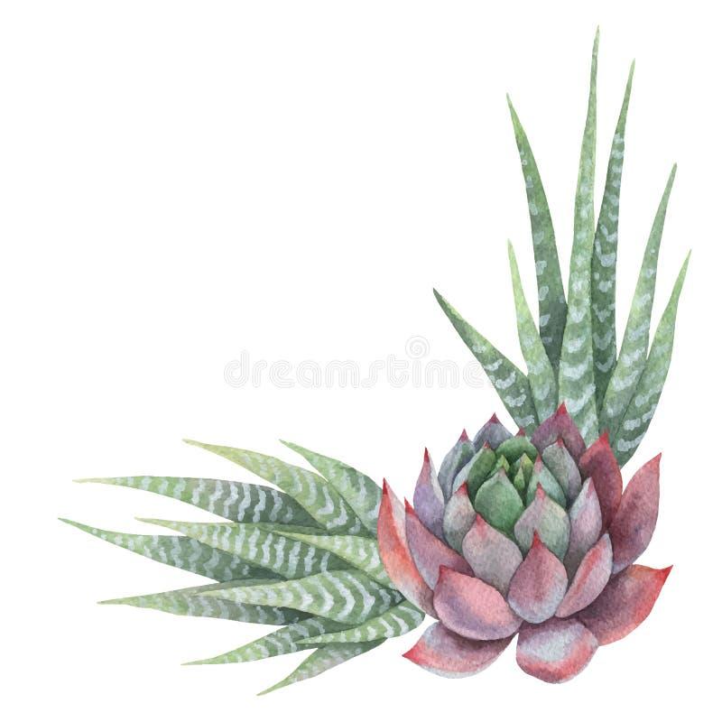 Ramo del vector de la acuarela de cactus y de plantas suculentas aislados en el fondo blanco ilustración del vector