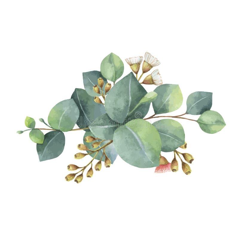 Ramo del vector de la acuarela con las hojas y las ramas verdes del eucalipto
