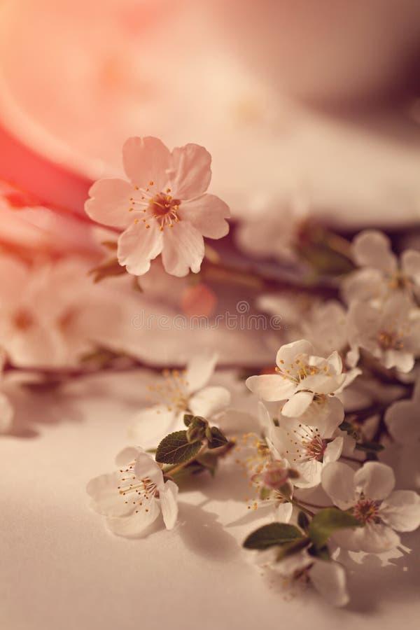 Ramo delicado de la cereza con la servilleta del cordón fotos de archivo