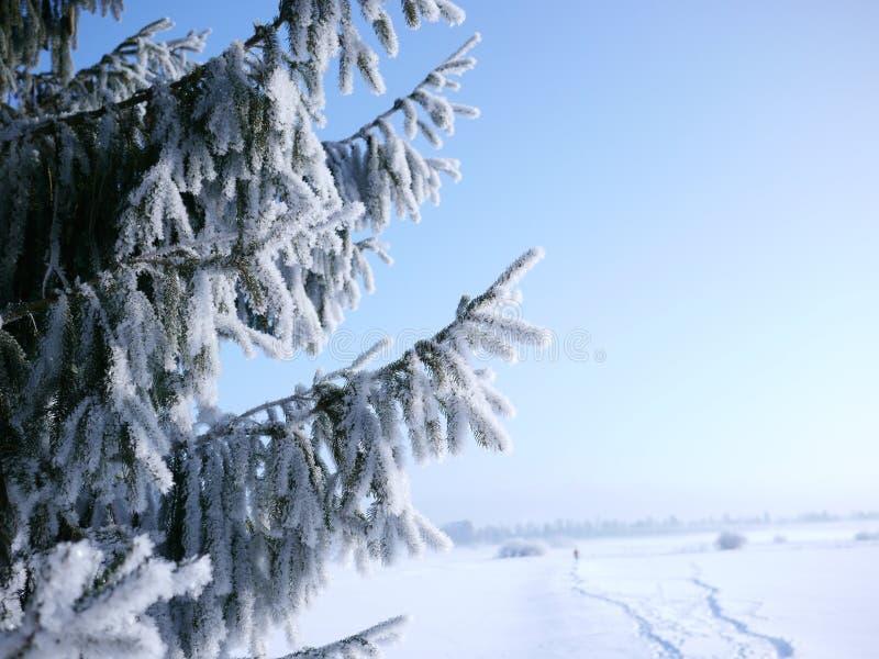 Ramo dell'abete con neve e percorso nei precedenti immagini stock