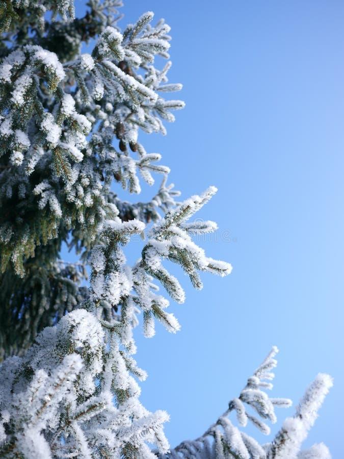 Ramo dell'abete con neve e percorso nei precedenti immagini stock libere da diritti