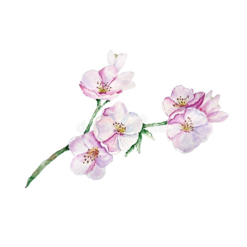 Ramo dell'acquerello con i fiori royalty illustrazione gratis