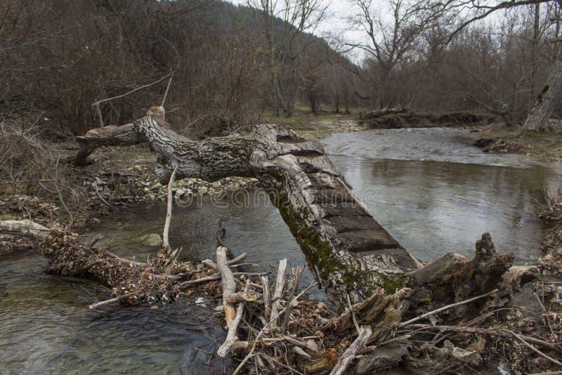 Ramo dell'albero che resta come cielo di grey del ponte fotografia stock libera da diritti