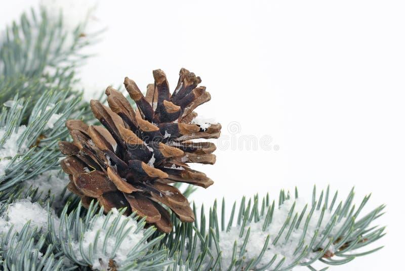 Ramo dell'albero di Natale con il cono fotografia stock