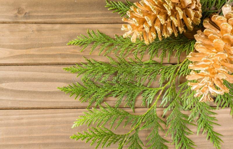 Ramo dell'albero di Natale e fondo della pigna fotografia stock libera da diritti