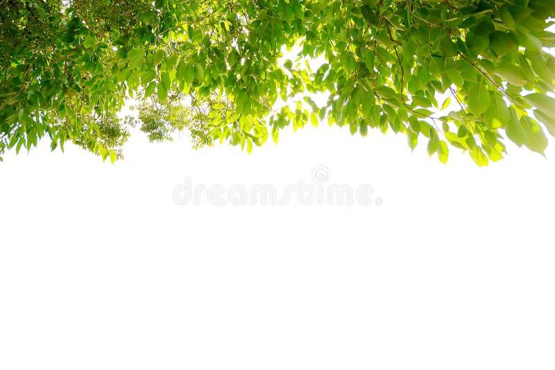 Ramo di albero fotografie stock libere da diritti