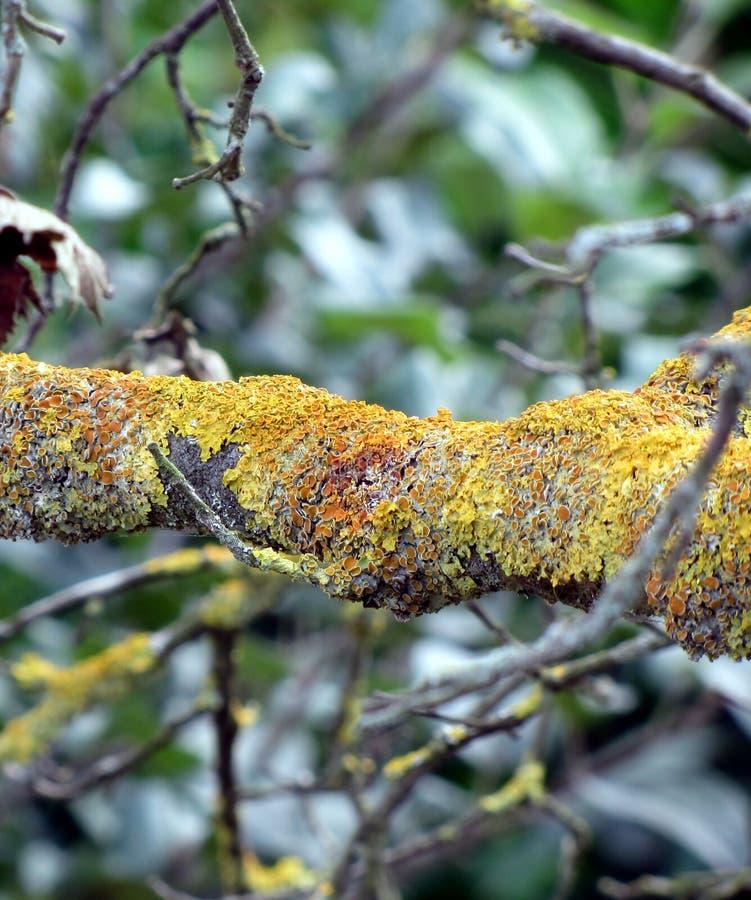 Ramo di albero con il fungo del muschio fotografia stock