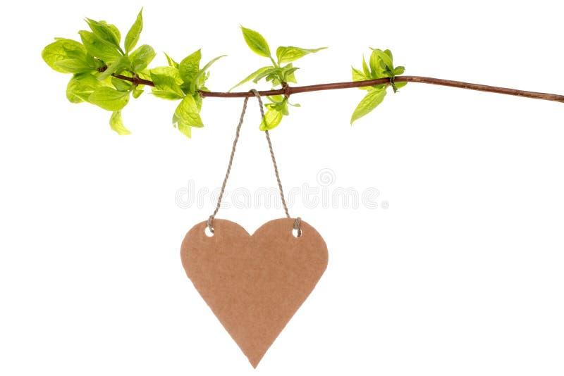 Ramo di albero con l'etichetta a forma di del cuore immagini stock