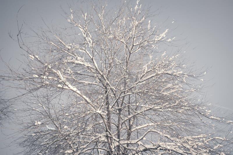 Ramo di albero congelato nel parco o nella foresta con la brina del ghiaccio e della neve sull'immagine nebbiosa fredda di notte  fotografia stock