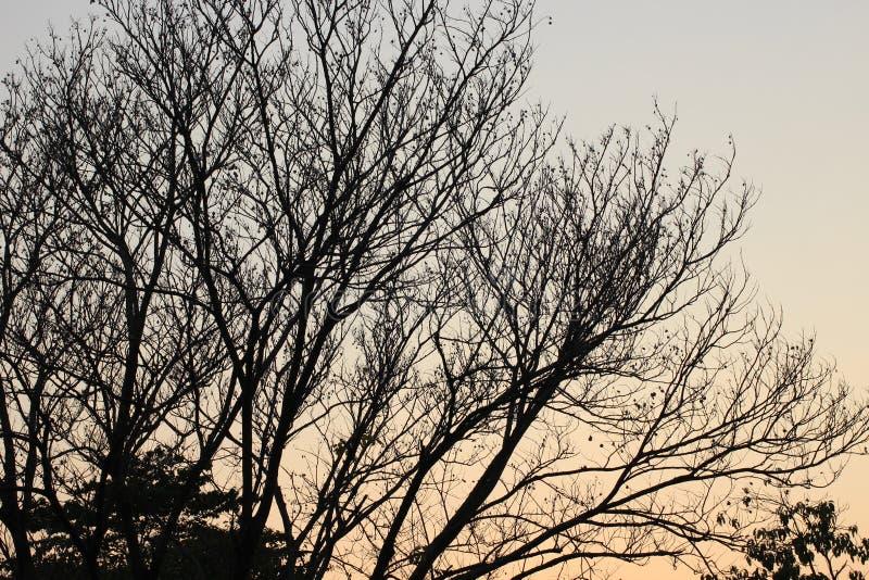 Ramo di albero e fondo nudi del cielo immagini stock libere da diritti