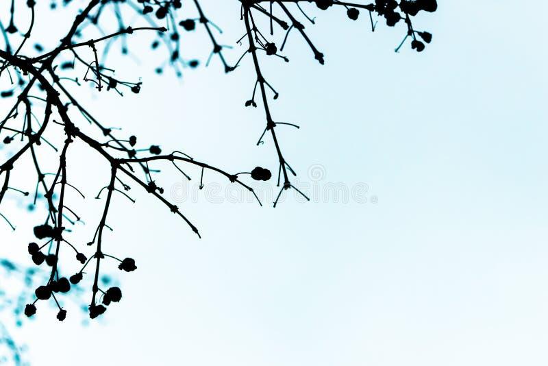 Ramo di albero e siluetta delle foglie contro il fondo del cielo blu immagini stock libere da diritti