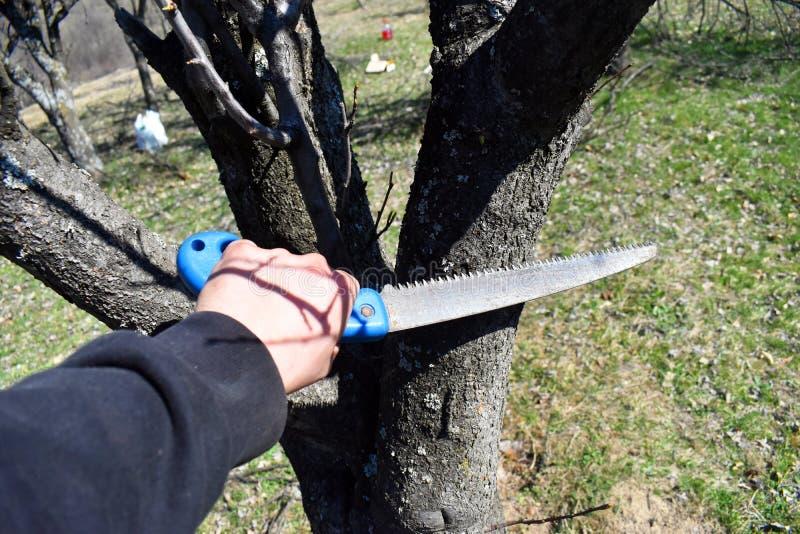 Ramo di albero di taglio dell'uomo con la sega a mano immagine stock