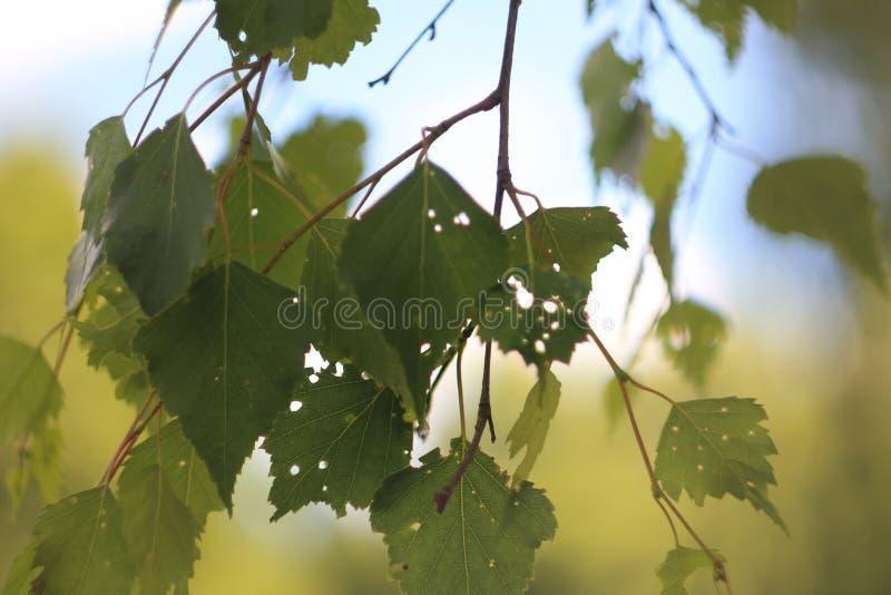 Ramo di autunno delle foglie fotografie stock