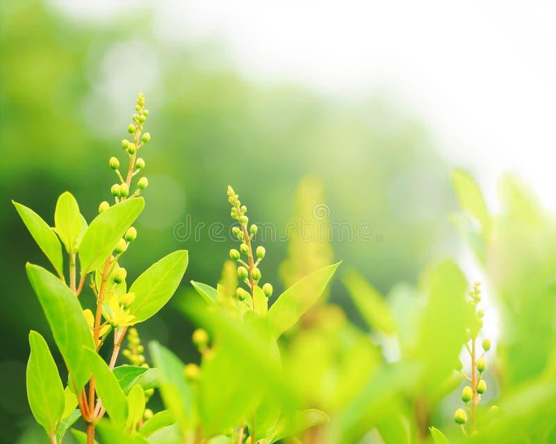 Ramo di estate con il fondo fresco delle foglie verdi Vista della natura del primo piano della foglia verde in giardino ad estate fotografia stock libera da diritti