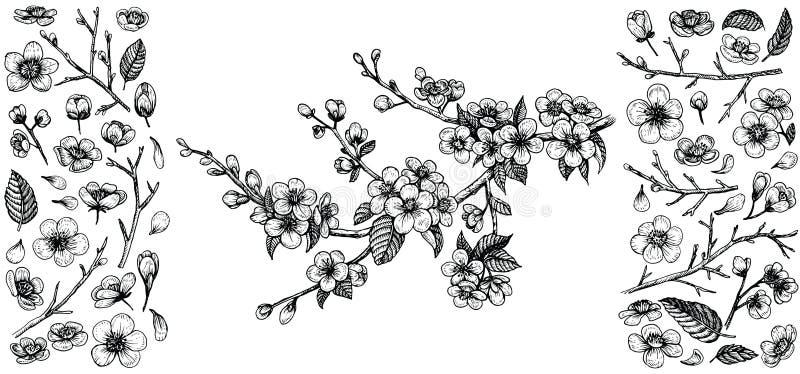 Ramo di fioritura della ciliegia, illustrazione di vettore e grande insieme degli elementi di progettazione: fiori, foglie, petal illustrazione vettoriale