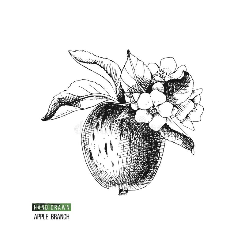Ramo di fioritura della mela royalty illustrazione gratis