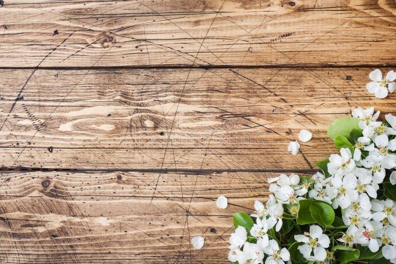 Ramo di fioritura della primavera su fondo di legno I fiori di Apple copiano lo spazio fotografie stock libere da diritti