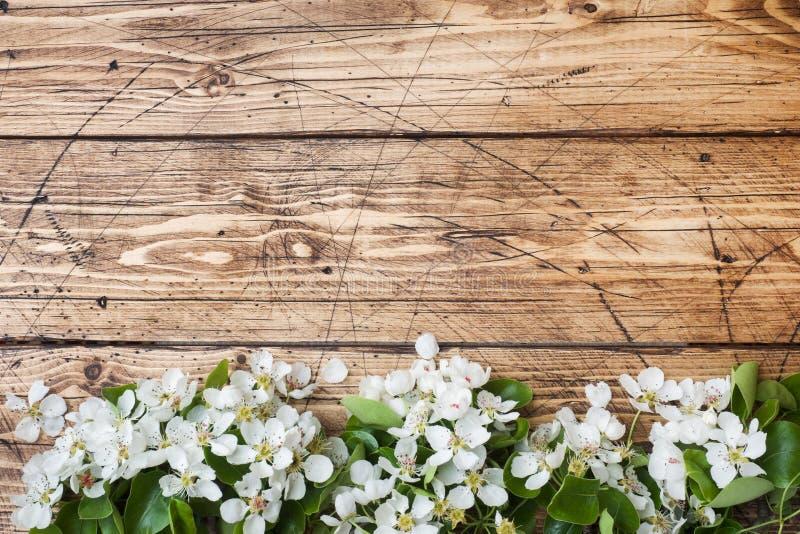 Ramo di fioritura della primavera su fondo di legno I fiori di Apple copiano lo spazio fotografia stock libera da diritti