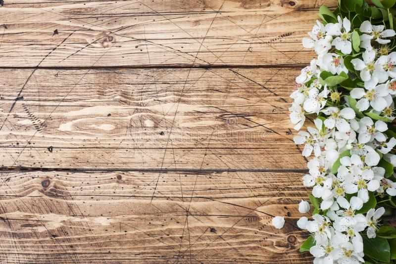Ramo di fioritura della primavera su fondo di legno I fiori di Apple copiano lo spazio fotografia stock