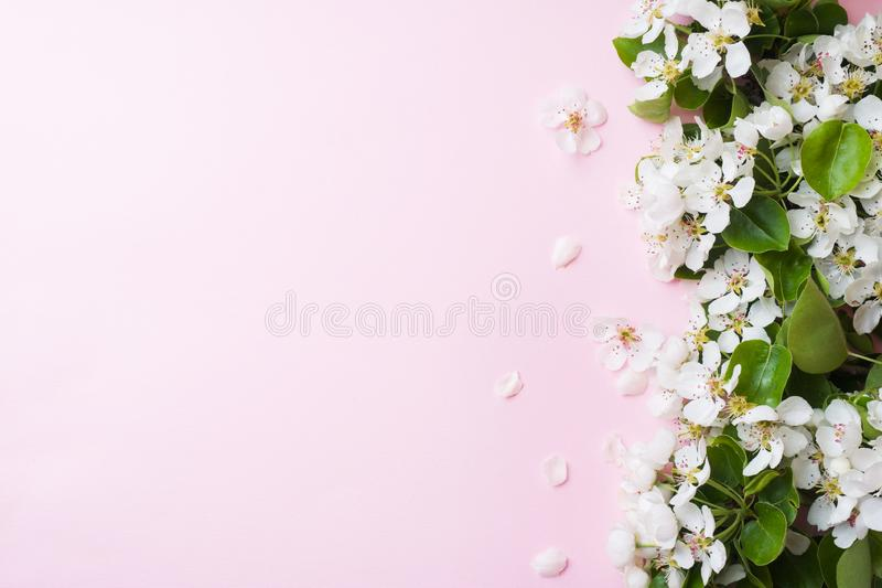 Ramo di fioritura della primavera su fondo rosa I fiori di Apple copiano lo spazio fotografia stock