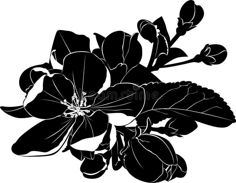 Ramo di fioritura di melo illustrazione di stock
