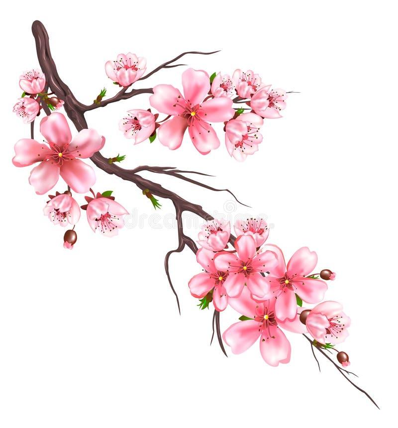 Ramo di fioritura di sakura illustrazione vettoriale