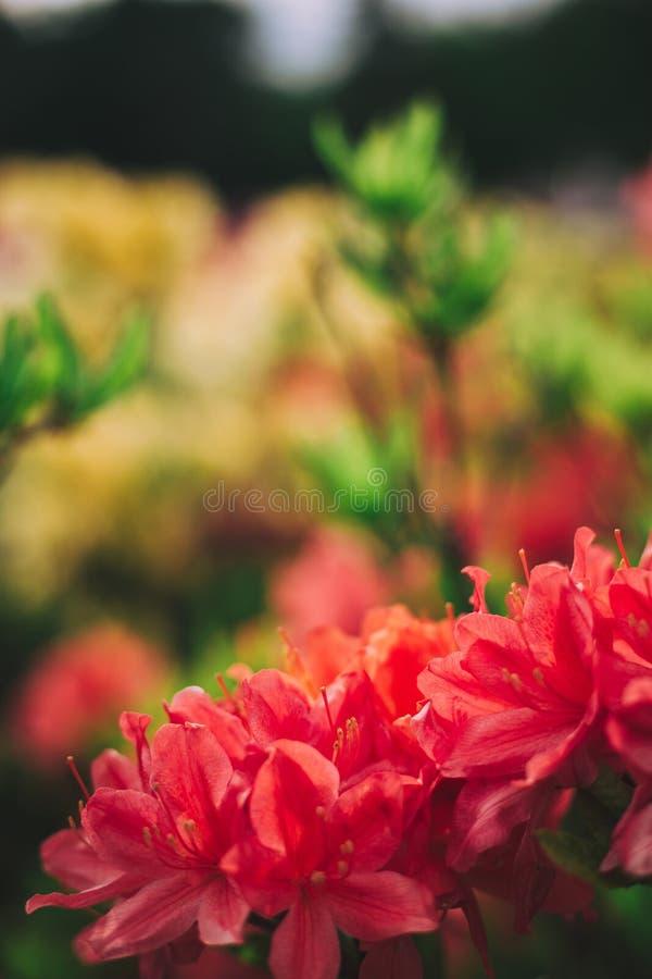 Ramo di piccoli fiori luminosi in priorit? alta immagine stock libera da diritti