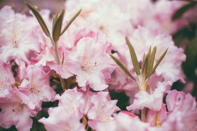 Ramo di piccolo primo piano leggero dei fiori immagine stock libera da diritti
