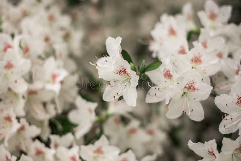 Ramo di piccolo primo piano leggero dei fiori immagini stock libere da diritti