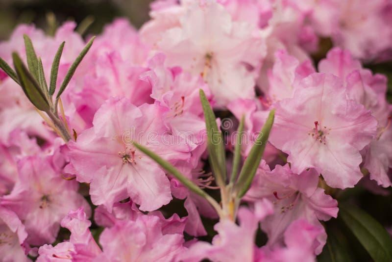 Ramo di piccolo primo piano leggero dei fiori immagini stock
