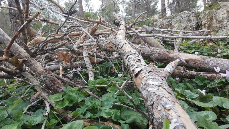 Ramo di pino sulla terra immagini stock libere da diritti