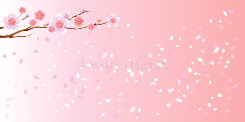 Ramo di sakura con i fiori ed i petali volanti bianchi rosa isolati sul fondo rosa di pendenza Petali di Sakura orizzontale Vetto illustrazione vettoriale
