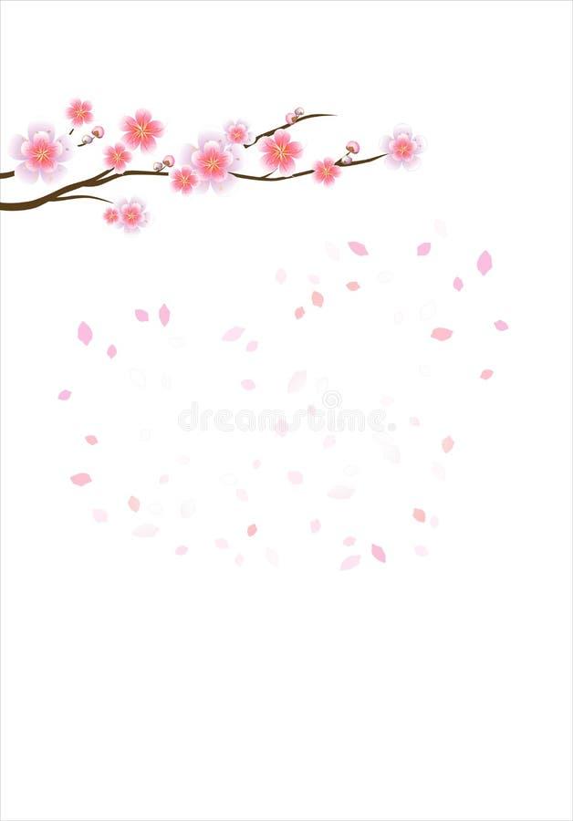 Ramo di sakura con i fiori Ramo del fiore di ciliegia con i petali royalty illustrazione gratis