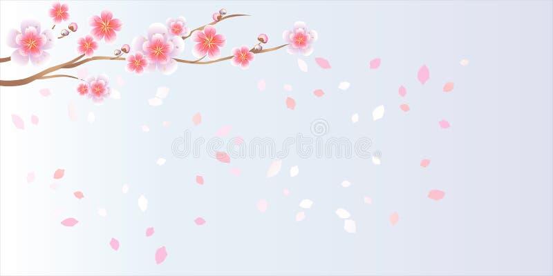 Ramo di sakura con i fiori Ramo del fiore di ciliegia con i petali illustrazione vettoriale