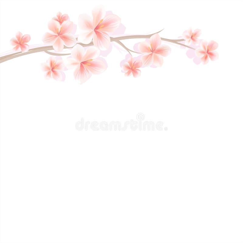 Ramo di Sakura con i fiori rosa-chiaro isolati su fondo bianco Fiori di Sakura Cherry Blossom Vettore royalty illustrazione gratis