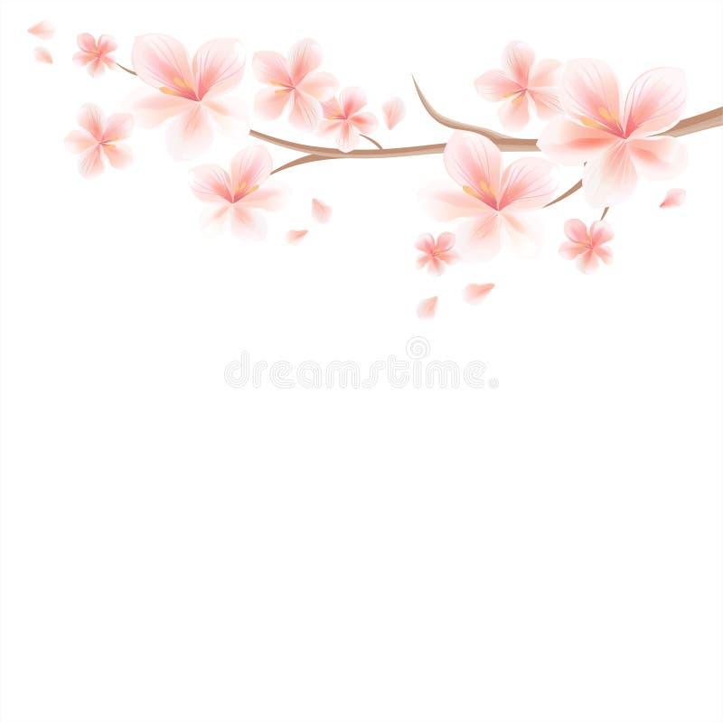 Ramo di Sakura con i fiori rosa ed i petali di volo isolati sopra royalty illustrazione gratis