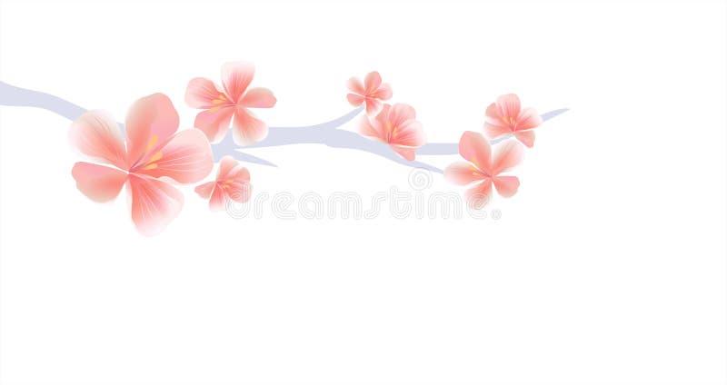 Ramo di Sakura con i fiori rosa isolati su fondo bianco Fiori di Sakura Cherry Blossom Vettore ENV 10, cmyk illustrazione vettoriale