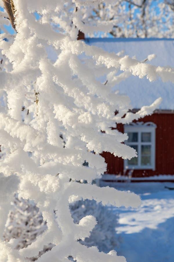 Ramo di Snowy ad un giardino immagini stock libere da diritti